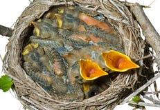 молочница 6 гнездев Стоковое Фото