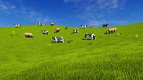 Молочные коровы пасут на открытом зеленом луге Стоковые Изображения RF