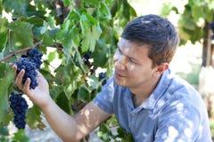 Молодой человек на винограднике Стоковые Фото