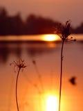 молчком заход солнца Стоковые Изображения