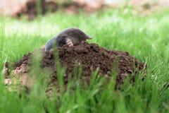 Моль в саде стоковые фотографии rf