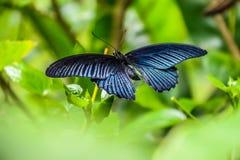 монарх бабочки цветастый Стоковое Фото