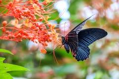 монарх бабочки цветастый Стоковые Фото