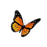 монарх бабочки Стоковые Фото