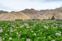 Монастырь Chemrey в лете с много цветет, Leh Ladakkh стоковая фотография