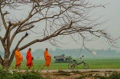 Монахи идут через рисовые поля на Chiangrai, Таиланде Стоковое Изображение RF