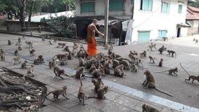 Монах и обезьяна Стоковые Фото