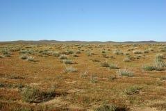 монгольская степь Стоковое Изображение RF