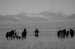 Монгольские лошади в горах во время фестиваля беркута Стоковое Изображение RF
