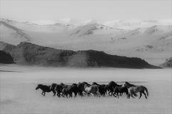Монгольские лошади в горах во время фестиваля беркута Стоковые Изображения