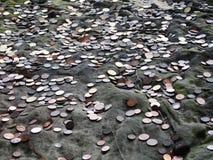 Монетка для желания Стоковые Изображения