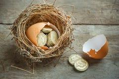 Монетки английского фунта с гнездом птицы Стоковое Фото