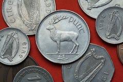 Монетки Ирландии красный цвет elaphus оленей cervus стоковое изображение rf
