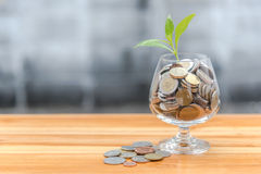Монетки и семя в ясной бутылке стоковое фото