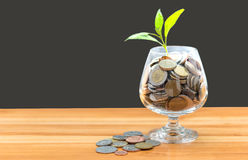 Монетки и семя в ясной бутылке Стоковая Фотография
