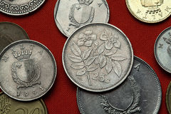 Монетки Мальты Вечнозелёное растение подняло (sempervirens Розы) стоковые изображения