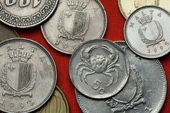 Монетки Мальты Мальтийсный пресноводный краб (lanf Potamon fluviatile стоковые фотографии rf