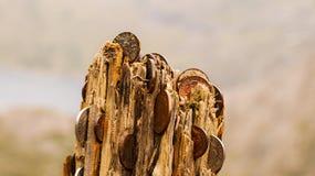 Монетки Пенни вставленные в деревянном хоботе Стоковая Фотография RF