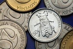 Монетки Словении стоковая фотография