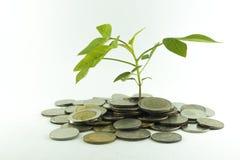 Монетки Таиланда бата с деревьями стоковое изображение