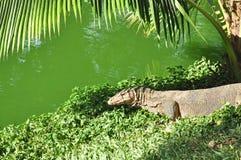 Монитор воды в зеленом парке стоковое фото