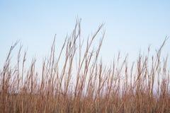 Монокультура травы стоковое фото rf