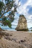 Монолит утеса песчаника за камнями в песке на бухте собора, Новой Зеландии 11 стоковое изображение rf