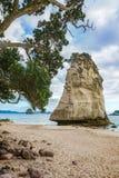 Монолит утеса песчаника за камнями в песке на бухте собора, Новой Зеландии 13 стоковые фото