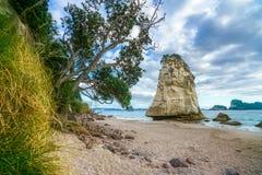 Монолит утеса песчаника за камнями в песке на бухте собора, Новой Зеландии 8 стоковые изображения
