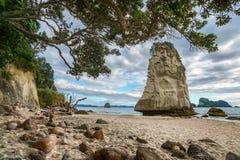 Монолит утеса песчаника за камнями в песке на бухте собора, Новой Зеландии 15 стоковое фото