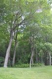 Монреаль, 27-ое июня: Парк держателя королевский от Монреаля в провинции Квебека Стоковое Фото
