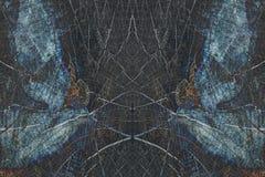 Монтаж зеркального отображения отрезанного ствола дерева стоковое фото