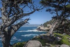 Монтерей Cypress и бечевник стоковое фото rf