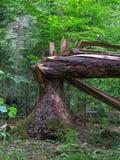 Монументальное старое сломанное елевое Стоковые Фото