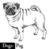 Мопс стиля эскиза собак Стоковые Изображения