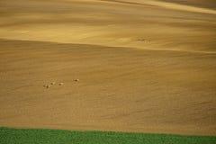 Моравия Rolling Hills с оленями весной Стоковые Фотографии RF