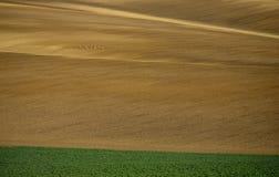 Моравия Rolling Hills с оленями весной Стоковые Фото