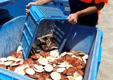 Морепродукты - свежие Scallops. Стоковое Изображение RF
