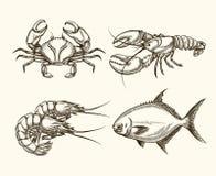 Морепродукты вектора в стиле нарисованном рукой Стоковое Изображение RF