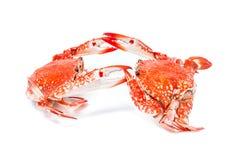 Морепродукты испаренные крабом на белой предпосылке Стоковые Фото