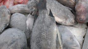Морепродукты Различные рыбы в магазине видеоматериал
