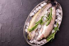 Морепродукты 2 сырцовых радужной форели marinated с известкой, розмариновым маслом Стоковые Фотографии RF