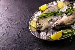 Морепродукты 2 сырцовых радужной форели marinated с известкой, розмариновым маслом Стоковые Изображения RF