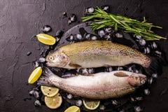 Морепродукты 2 сырцовых радужной форели marinated с известкой, розмариновым маслом Стоковое фото RF
