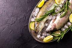 Морепродукты 2 сырцовых радужной форели marinated с известкой, розмариновым маслом Стоковое Изображение RF