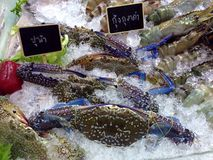 Морепродукты Стоковые Фотографии RF