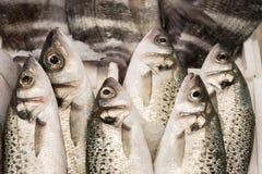 Морепродукты ans рыб Стоковые Изображения RF