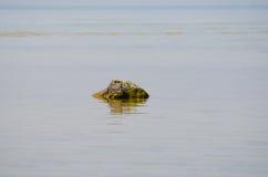 1 море ландшафта Стоковые Изображения RF