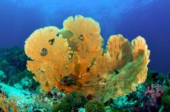 море вентилятора Стоковое Фото