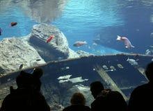 море вниз Стоковые Фотографии RF